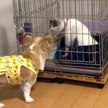 【感涙必至!】元気のない猫にずっと付き添っている犬。ふたりの友情は本物!