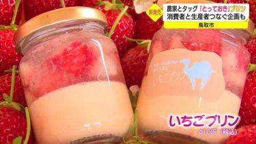 新品種のイチゴ「とっておき」がプリンに!農家とタッグ組み商品化(鳥取)