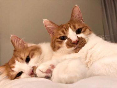 インスタの写真に一目惚れ 保護された2匹の子猫は透き通るような美しい猫だった
