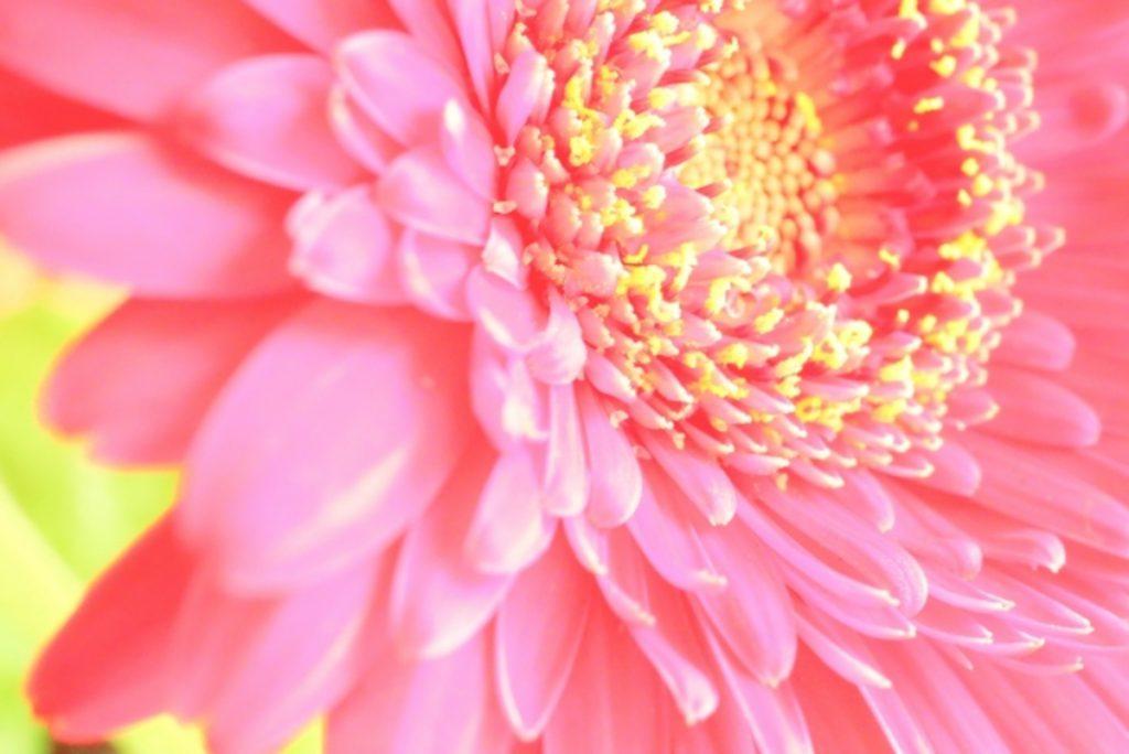 明るい色の花イメージ