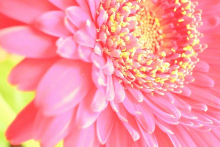 明るい色の花のイメージ