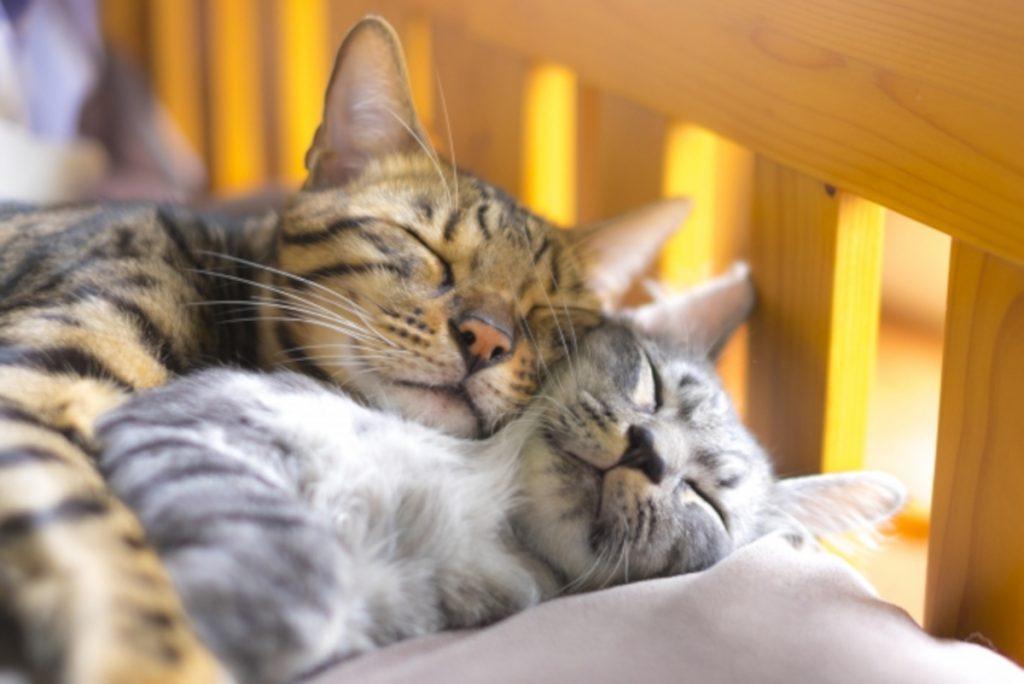 お昼寝中の猫のイメージ