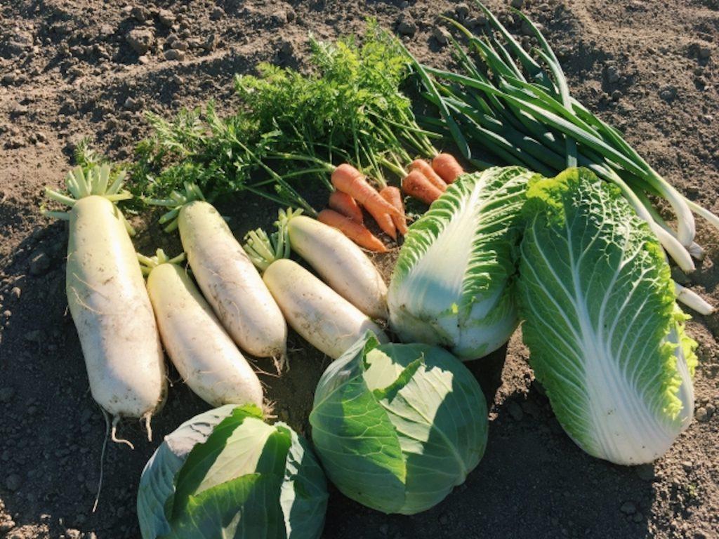 2月の旬の野菜イメージ