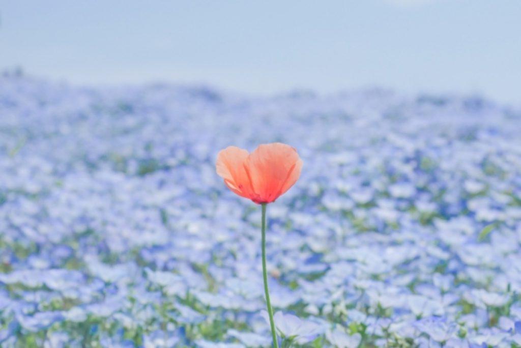 ハート形の花のイメージ