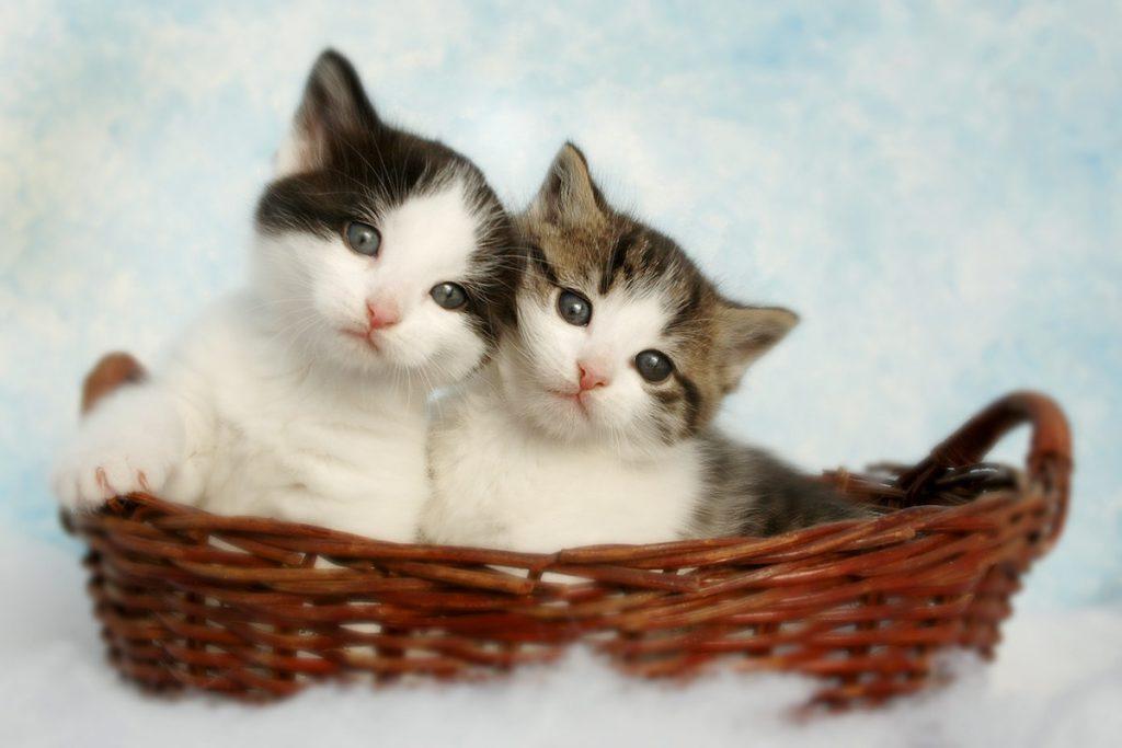 猫好き芸能人が飼っている猫のイメージ