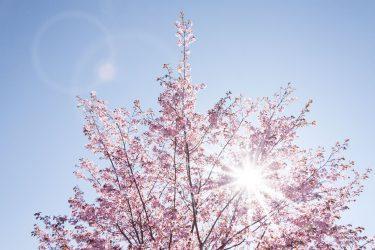 期待の春ドラマが盛りだくさん♪2021年4月スタートの地上波テレビドラマまとめ