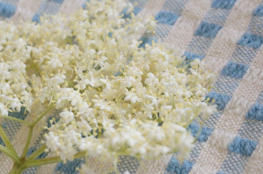 エルダーフラワーの生花
