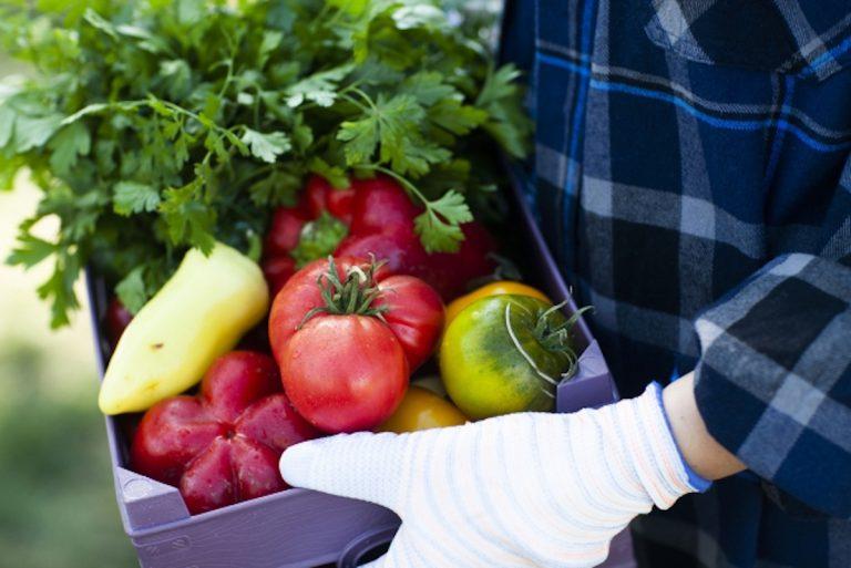 初心者でもプランターで簡単家庭菜園!9月・10月・11月にプランターで育つおすすめ植物9選