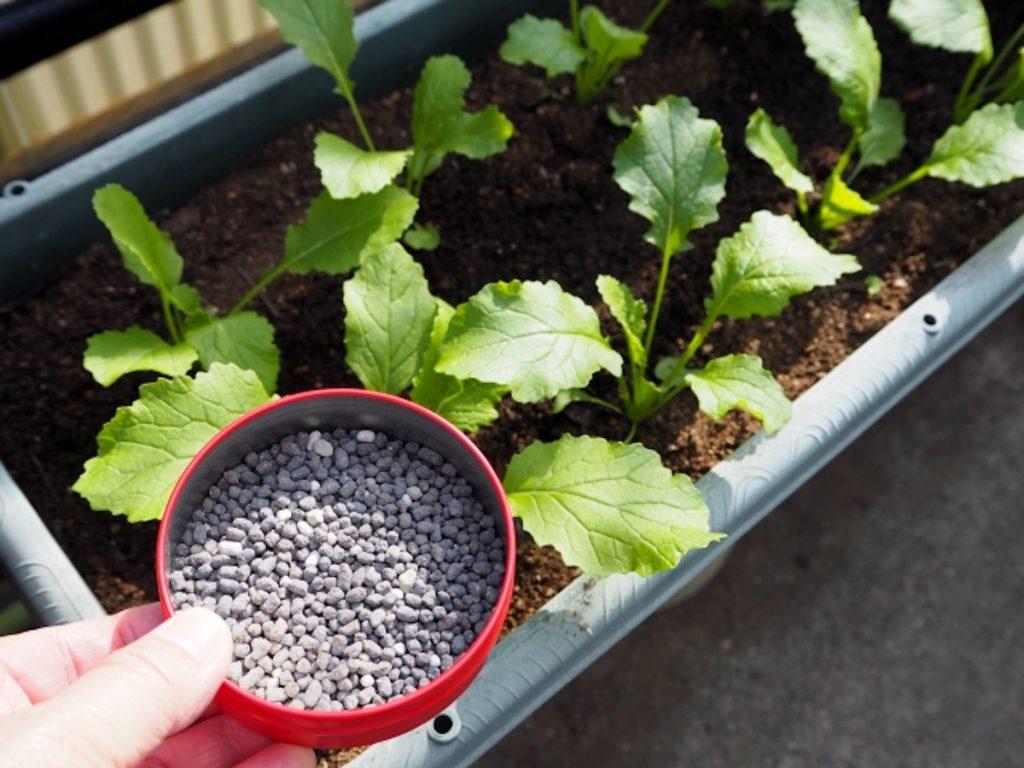 家庭菜園の肥料