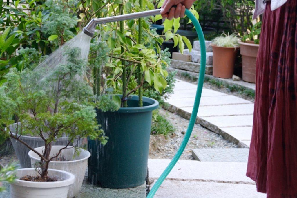 家庭菜園の水やり