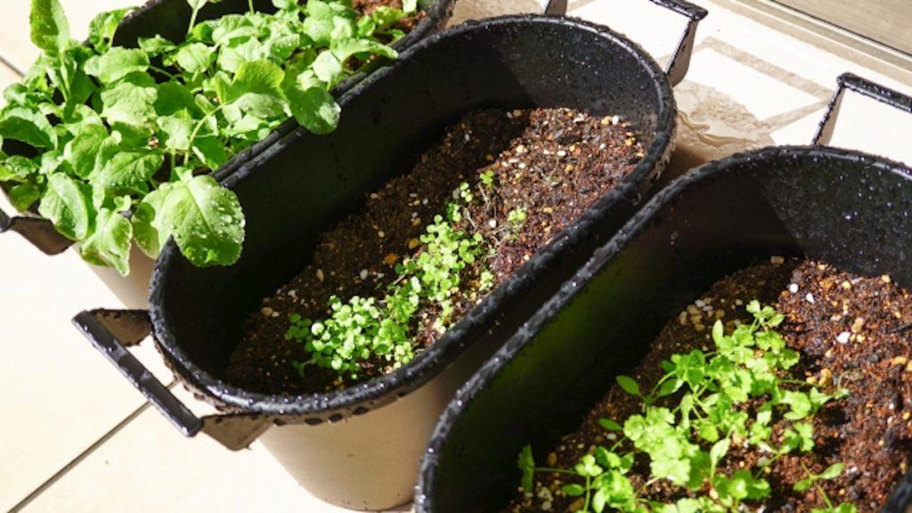 家庭菜園の鉢・プランター