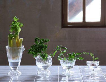 サステナブルな暮らしにぴったり!「リボベジガラス」でプチ農園を始めよう